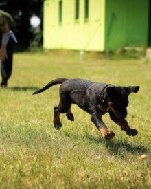 Artificial Grass Benefits and Drawbacks