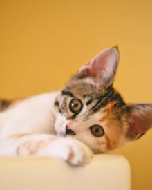 Signs Your Pet Might Need to Visit a Veterinarian